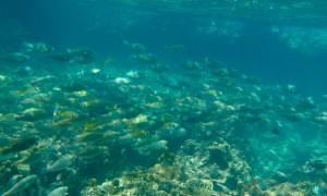 Koh-Tao-Diving