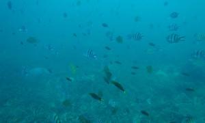 Koh-Tao-Underwater