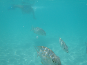 fishes-snorcheling-koh-tao-thailand