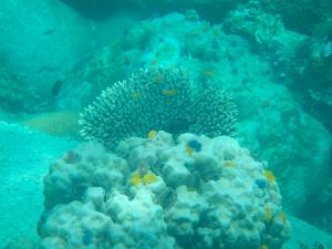 underwater-snorcheling-koh-tao-thailand