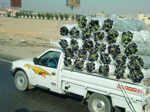 Car-with-aubergines-cairo
