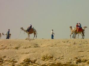 camels-cairo