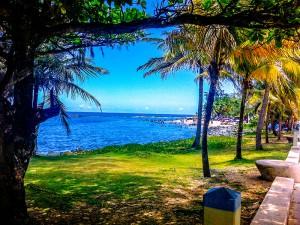 Puerto-Rico-Beach-Palm