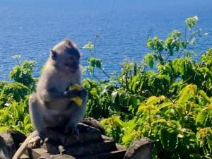 Monkey-Uluwatu-Bali-Temple
