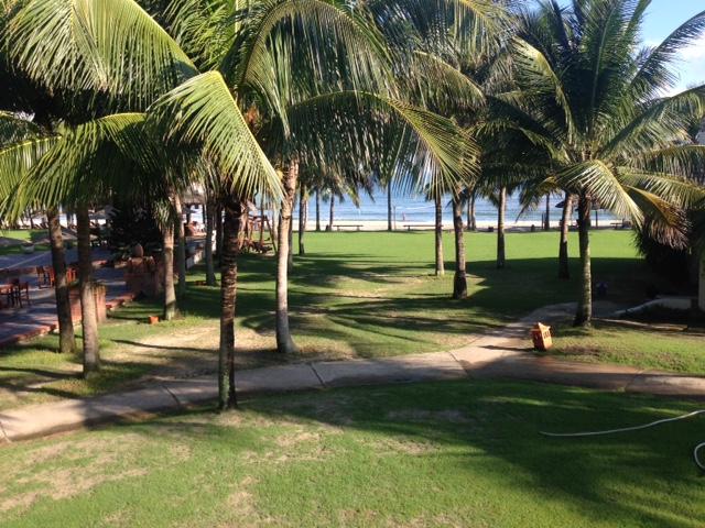palm-garden-trees