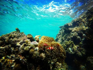 finding-nemo-cacnipa-island