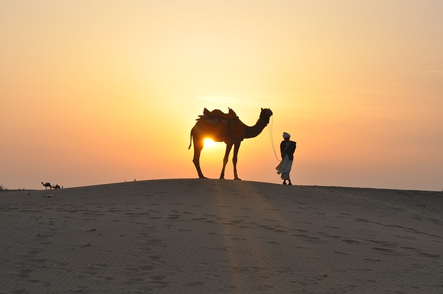 camel-desert-travel-bucket-list