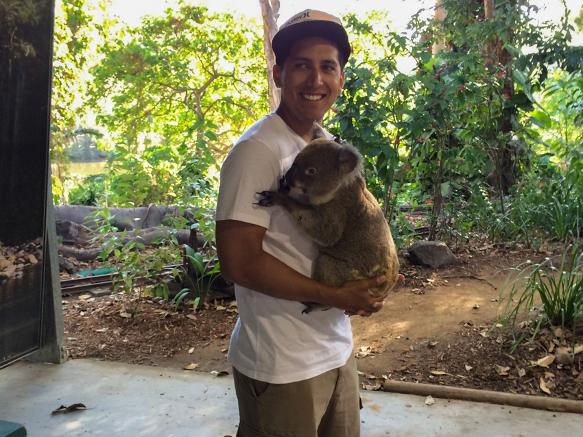 cuddle-koala-bear-travel-bucket-list