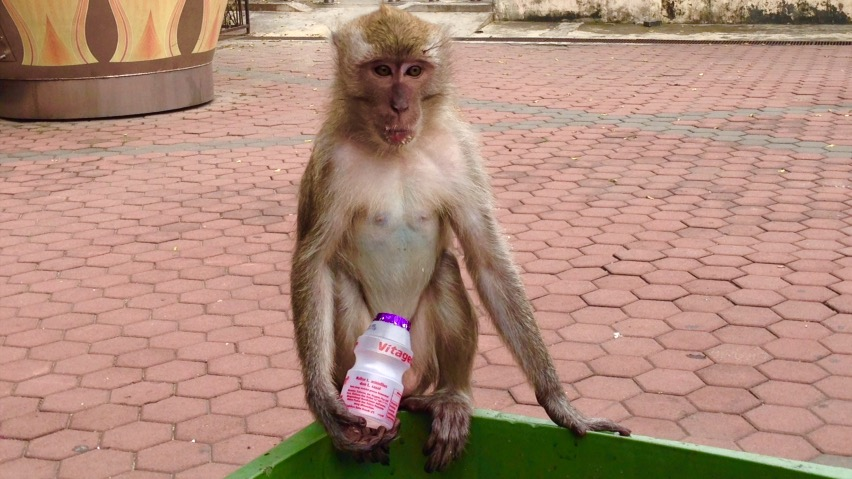 funny-monkey-south-east-asia