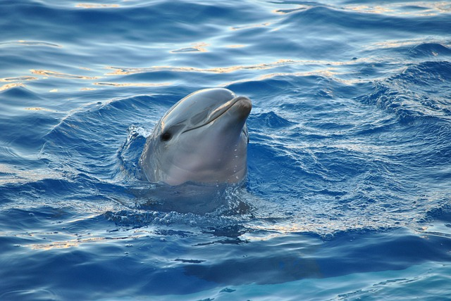 kissing-a-dolphin-travel-bucket-list