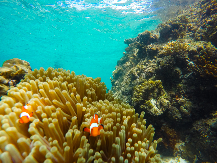 nemo-philippines-travel-bucket-list