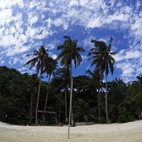 cacnipa-island