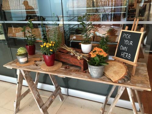 pick-herbs-andels-prague